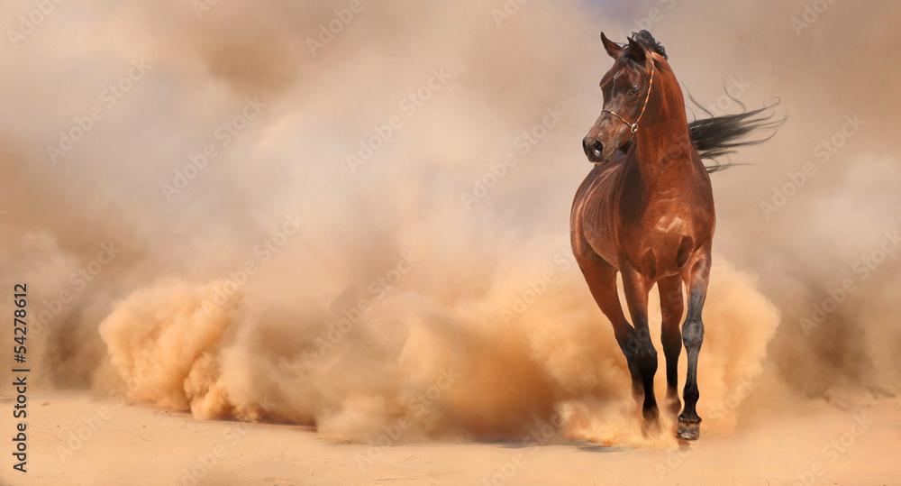 Fototapety, obrazy: Arabian horse running out of the Desert Storm