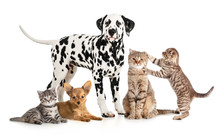 Pets Animals Group Collage For...