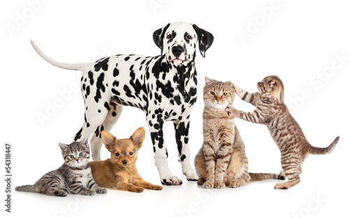 Fotografía  pets animals group collage for veterinary or petshop isolated