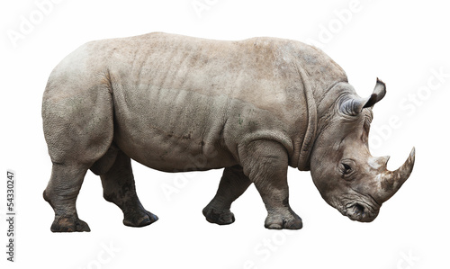 Spoed Foto op Canvas Neushoorn rhino on white background