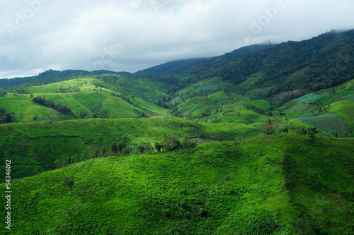 Foto op Plexiglas Groene Landscape of the rice and corn plantations in Thailand
