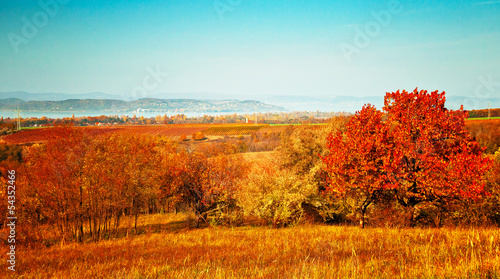 Foto op Canvas Baksteen Field with trees in autumn