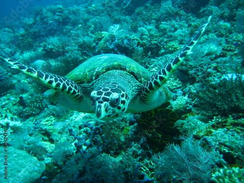 Foto op Aluminium Onder water Schildkröte