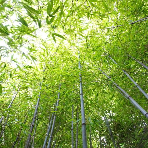 Naklejka premium bambusowy las