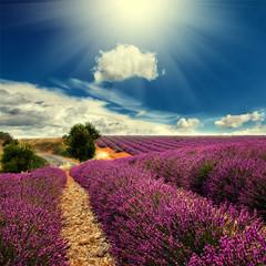 Naklejka lavender field