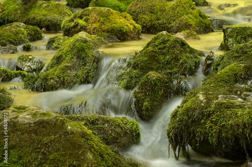 Fototapety, obrazy: Creek closeup in a forest
