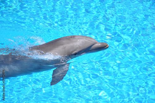 Staande foto Dolfijnen Dolphin Swimming