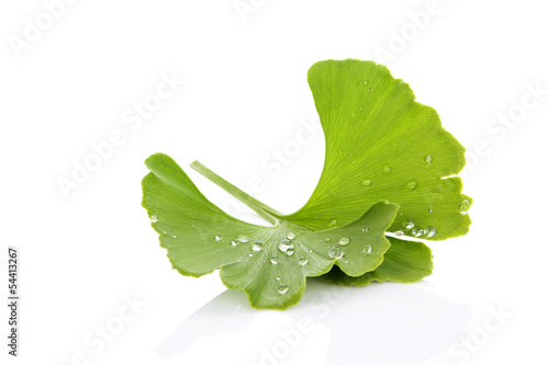 Carta da parati Ginkgo leaf with dew.