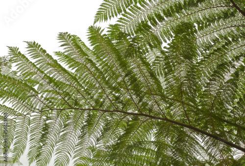 paproc-drzewa