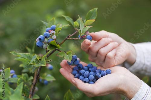 Obraz na płótnie Blueberries