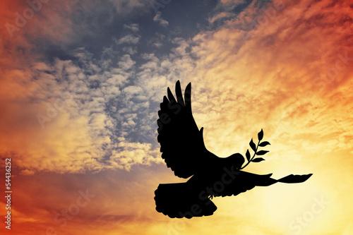 Fotografía dove of peace