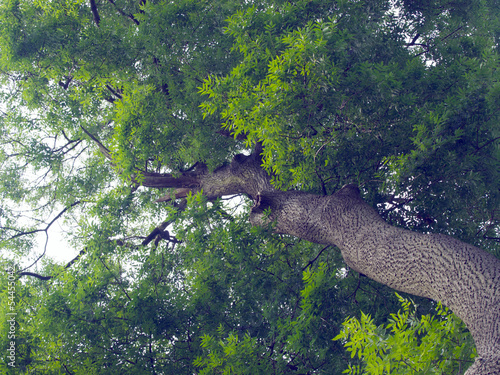 Fotografie, Obraz  Ash Tree