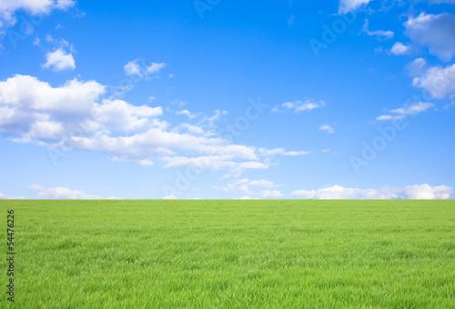Obraz 草原と青空 - fototapety do salonu