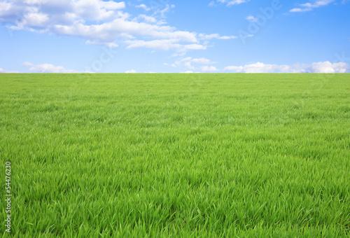 Canvastavla 草原と青空