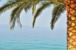 Palm tree on right side of frame with sea on background
