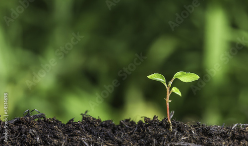 Tuinposter Planten Close up of young plant sprouting from ground