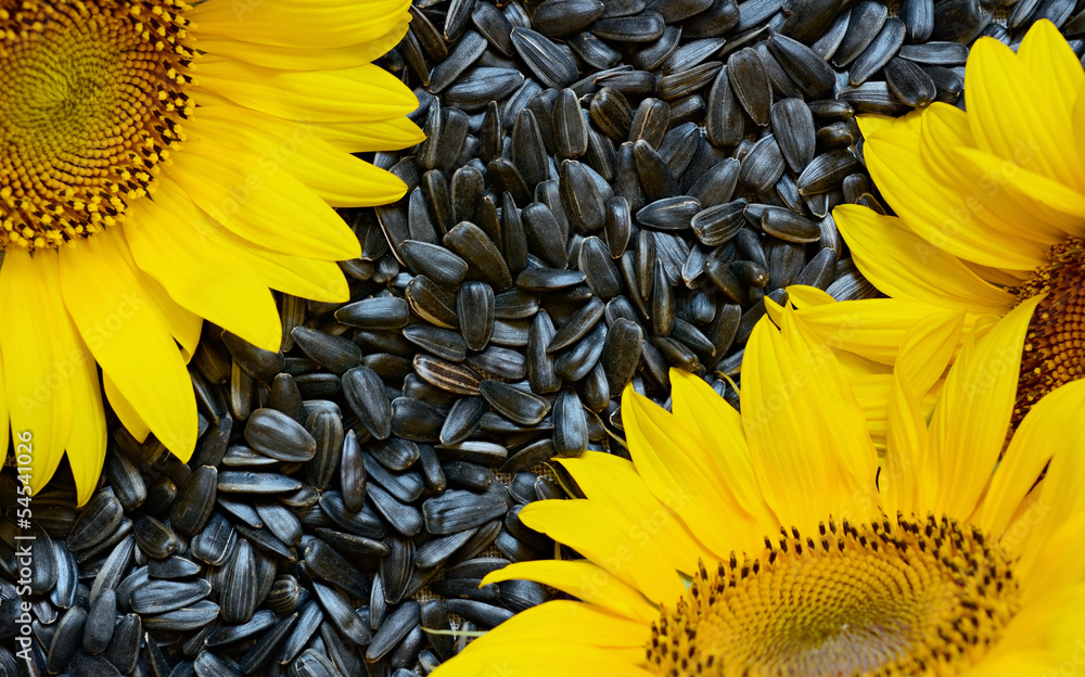 Sunflowers and seeds