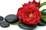 Fototapeta Kamienie - Róże na kamieniach do spa