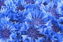 Close Up Of Beautful Blue Flow...