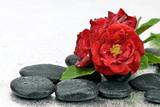 Fototapeta Kamienie - Róże na mokrych kamieniach bazaltowych