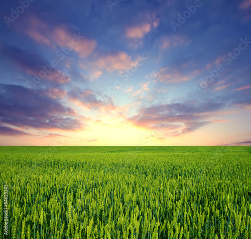Photo Stands Melon Green field and sunrise sky as background
