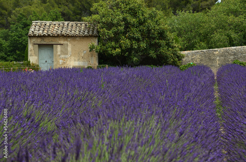 Tuinposter Lavendel Outhouse in van Gogh's asylum in Saint-Remy, France