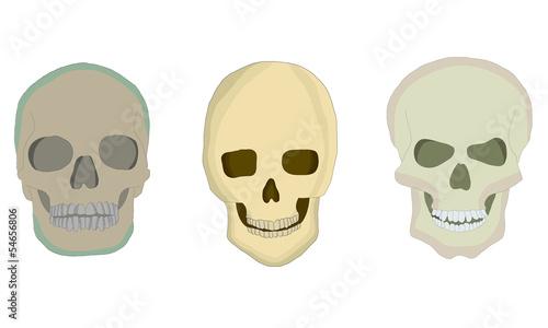 Skulls - fototapety na wymiar