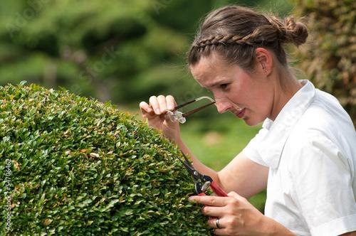 Fotografering Junge Frau in Business Kleidung beschneidet Buchsbaum