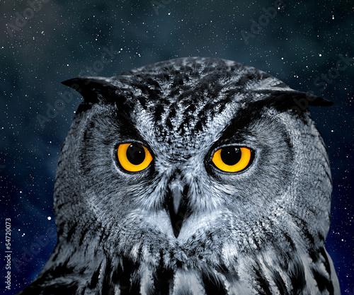 Acrylic Prints Eagle Owl, Bubo bubo