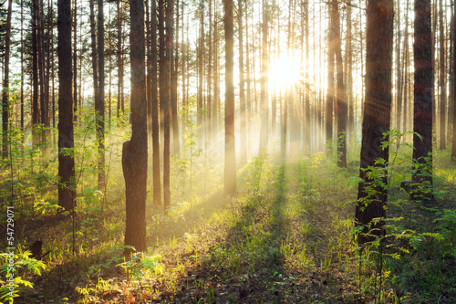 sunset in the woods - 54729071