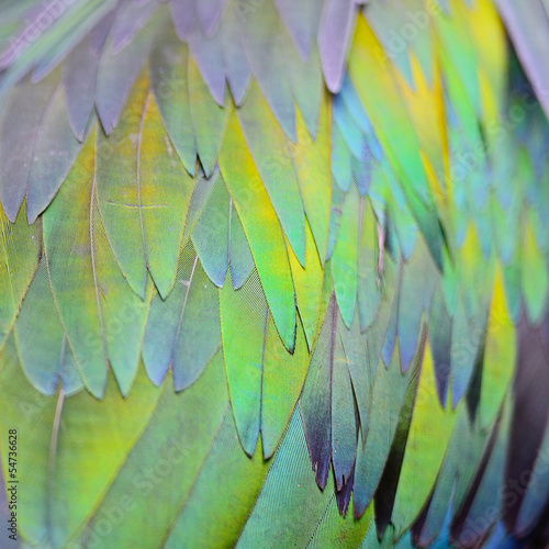 Nicobar Pigeon feather Wall mural