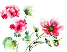 Geranium And Peony Flowers