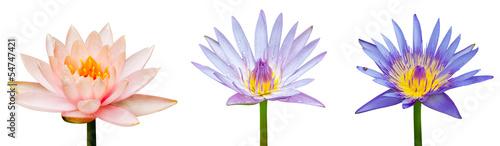 Foto auf Gartenposter Lotosblume Lotus flower isolated