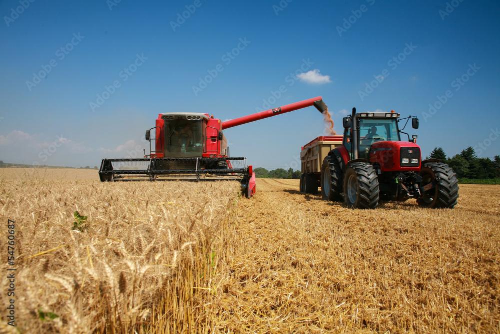Fototapety, obrazy: récolte du blé