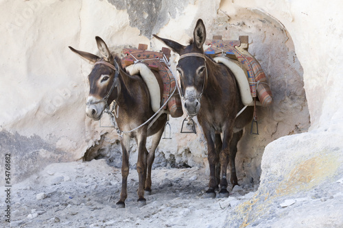 Tuinposter Ezel Greek donkeys