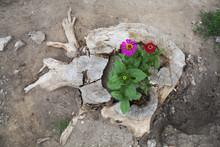 Flowers Growing In A Tree Stump