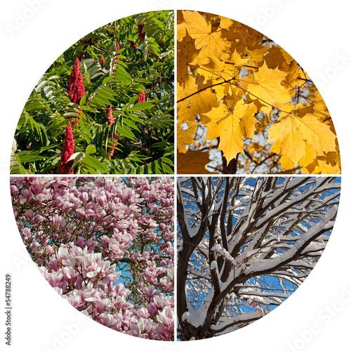Foto op Plexiglas Magnolia Jahreszeiten