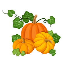 Three Orange Pumpkins. Vector Illustration.