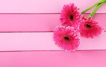Beautiful Pink Gerbera Flowers On Purple Wooden Table