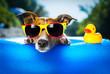 canvas print picture - beach dog