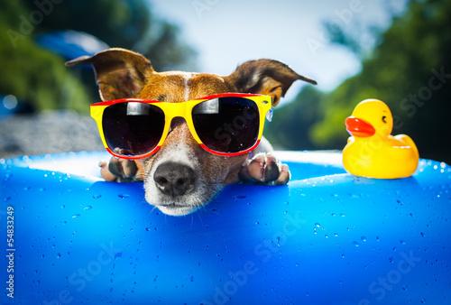 Obraz Pies na plaży - fototapety do salonu