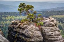 Baum Auf Felsspitze