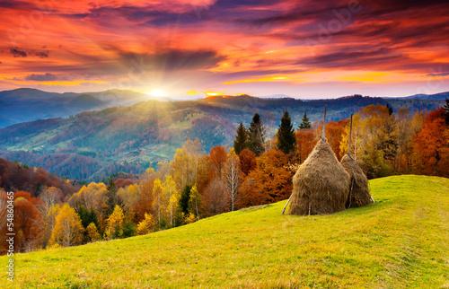 autumn - 54860465