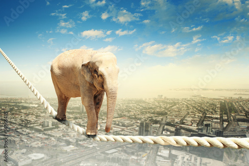 Foto auf AluDibond Bild des Tages Elephant walking on rope