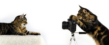 Cat As Photographer In Front Of White Background