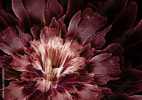 fraktal-streszczenie-kwiat