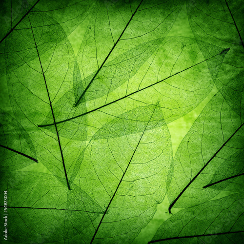 zielone-liscie-vintage