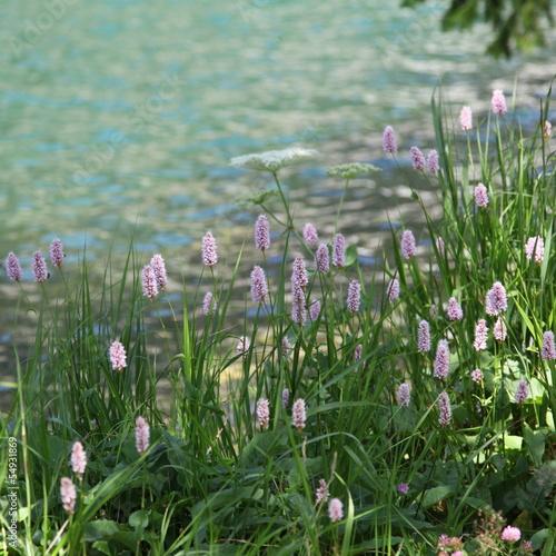 Foto op Plexiglas Weide, Moeras Bistorte près du lac - Champex.