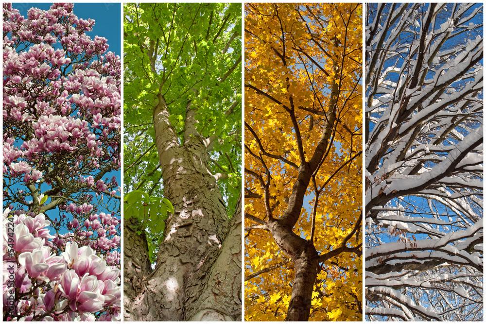 Fototapeta Vier Jahreszeiten