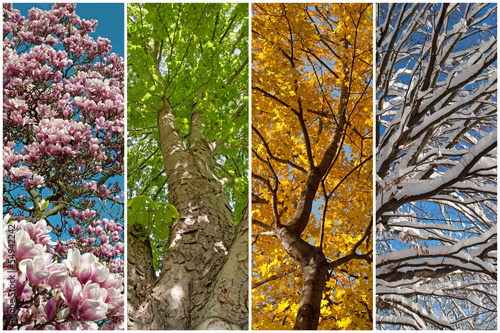 Vier Jahreszeiten Fotobehang